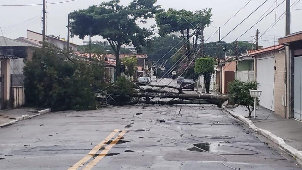 EDP atende 1.616 ocorrências de vegetação na rede elétrica no Alto Tietê